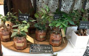 ガラスで育てる観葉植物